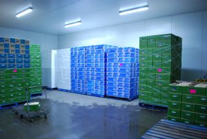 Bulmer Farms Cool Room Palletising Storage
