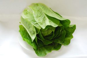 Bulmer Farms Cos Lettuce